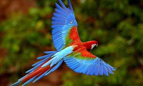 Macaw free birds wallpapers