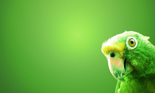 Parrot green free birds wallpapers