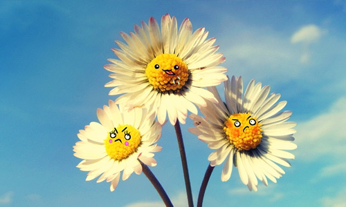 Cute daisy face flowers hi resolution wallpapers