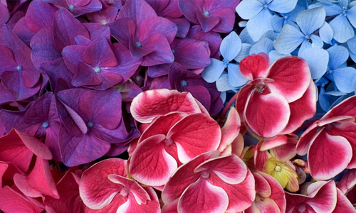 Purple red blue flowers hi resolution wallpapers