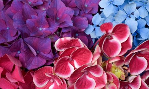 Purple Red Blue Flowers Hi Resolution Wallpapers