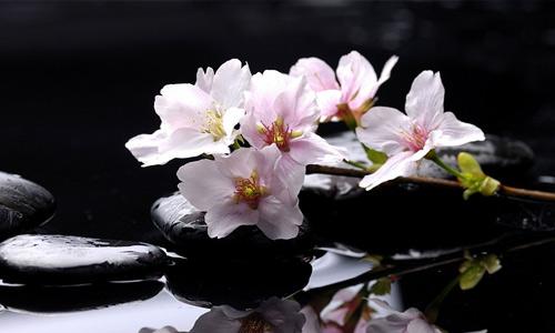 Light pink flowers hi resolution wallpapers