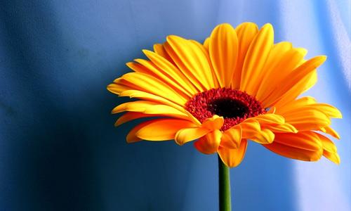 Orange flowers hi resolution wallpapers