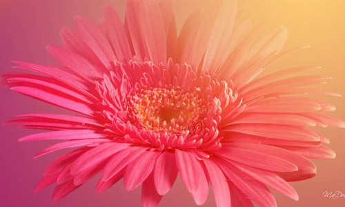 Beautiful flowers hi resolution wallpapers
