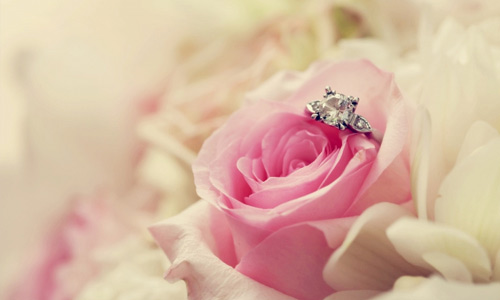 Romantic pink ring flowers hi resolution wallpapers