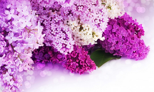 Beautiful purple flowers hi resolution wallpapers