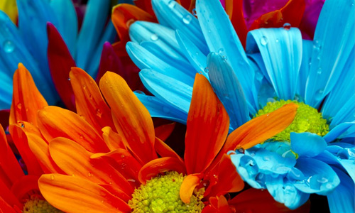 Colorful flowers hi resolution wallpapers