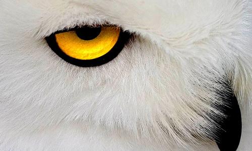 Eyes white
