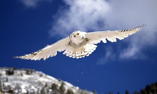 Snow white flying