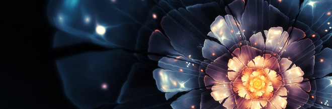 50+ Breathtaking Flower Wallpapers to Freshen You Up