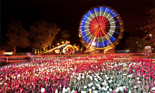 Long exposure tulip flowers ferris wheel photography