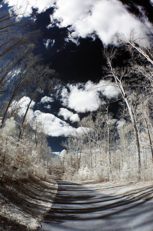 Trees road fisheye view fish eye photography