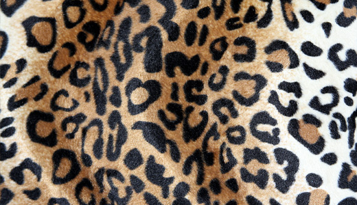 Nice leopard skin texture free download hi res high resolution