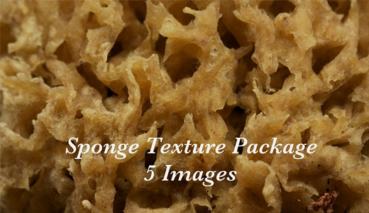Brown package sponge textures free download hi res high resolution