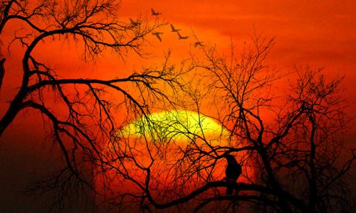 Last Spring Sunset