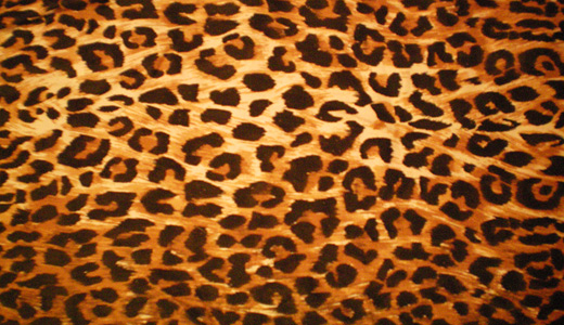 Orange leopard skin texture free download hi res high resolution