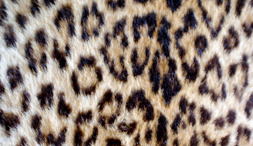 Beautiful fur leopard skin texture free download hi res high resolution
