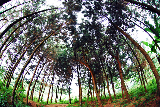 Forest trees fisheye view fish eye photography