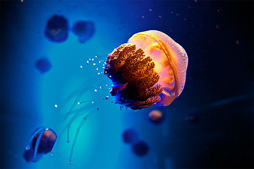 Small baby cute jellyfish photography