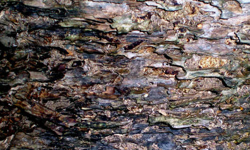 Dessicated Tree 1 texture