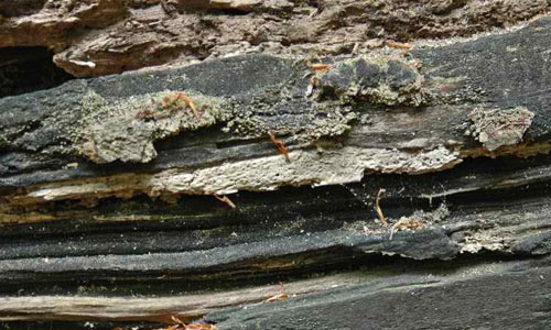 Rotting wood texture_001