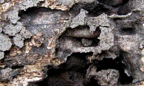 White Ant Eaten Wood Texture