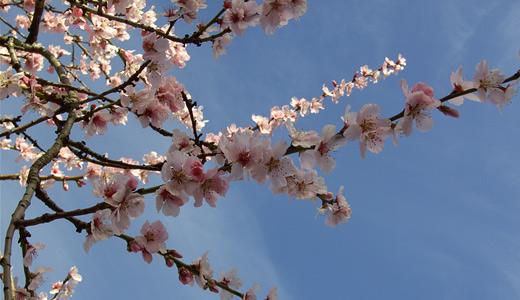 Branch pink flowers