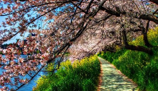 Sidewalk trees park