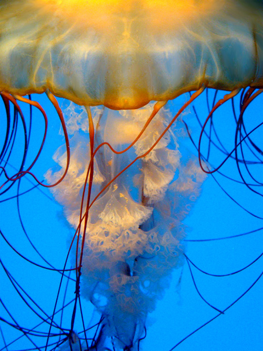 Close-up jellyfish photography