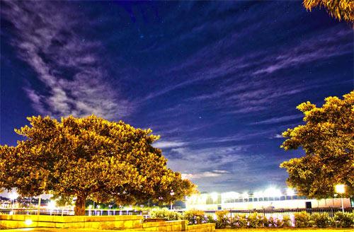 Tree and lights at night HDR