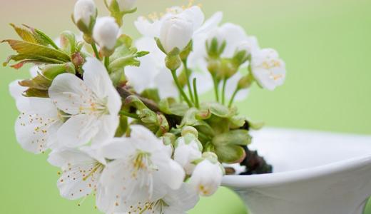 Vase white flower