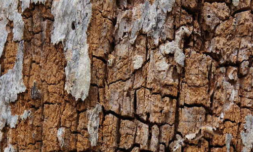 Wood Rot Texture