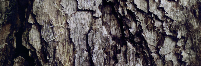 30 Dirty-Looking Rotten Wood Texture for Free Download