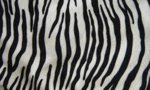 zebra texture stock