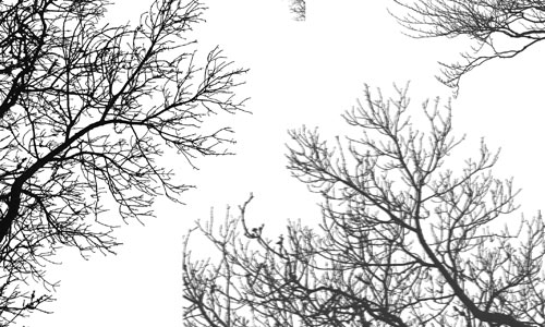 6 Hanging Branches Photoshop Brushes