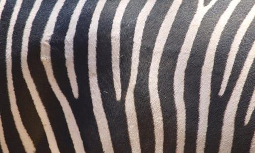 Fabric_02 (zebra) texture