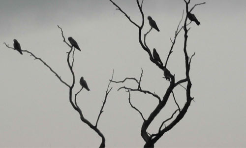 Branches and Birds Brushes