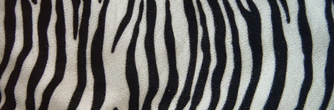 30 Striking Zebra Print Texture for Free Download