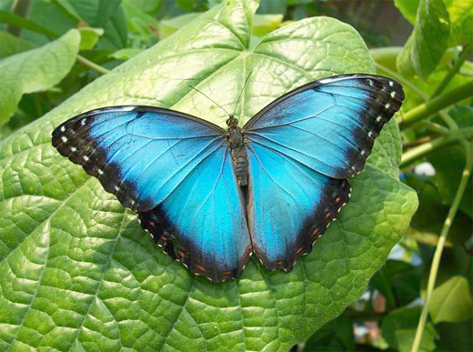 Blue butterfly photography