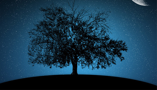 Night silhouette trees free download wallpapers high resolution hi res