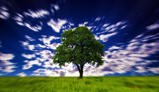 Hypnotic optical illusion trees free download wallpapers high resolution hi res