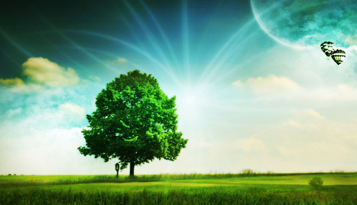 Lovely green trees free download wallpapers high resolution hi res