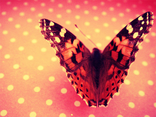 Red pink pretty butterfly photography