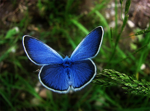 Pretty blue butterfly photography