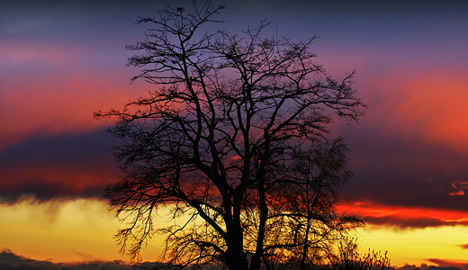 Sunset trees free download wallpapers high resolution hi res