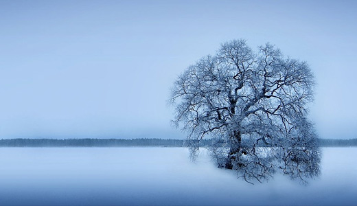 Ice frozen trees free download wallpapers high resolution hi res