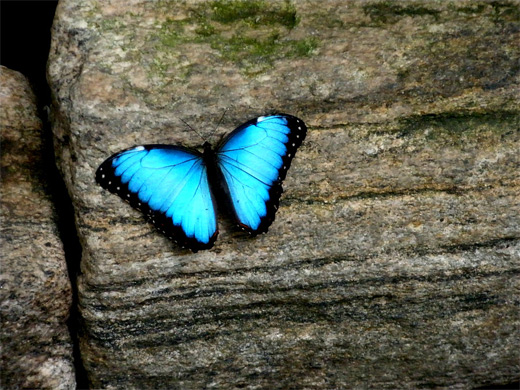 Neon blue glowing butterfly photography