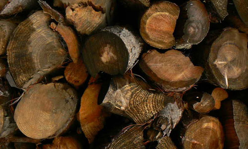 Cut Logs Texture
