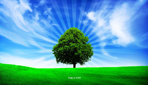 Lovely green the trees free download wallpapers high resolution hi res