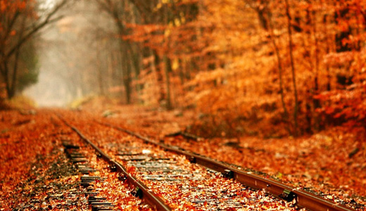 Orange leaves autumn railroad free download wallpapers forest